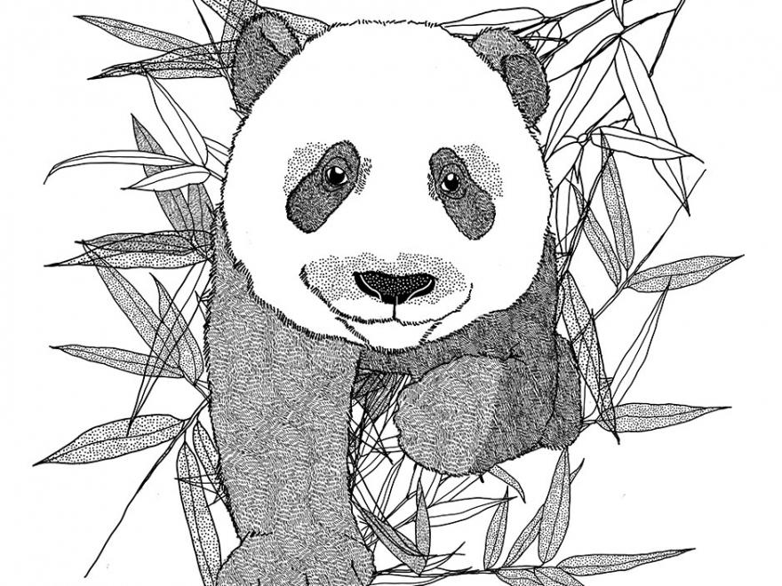 """""""Bunnies and Panda"""""""